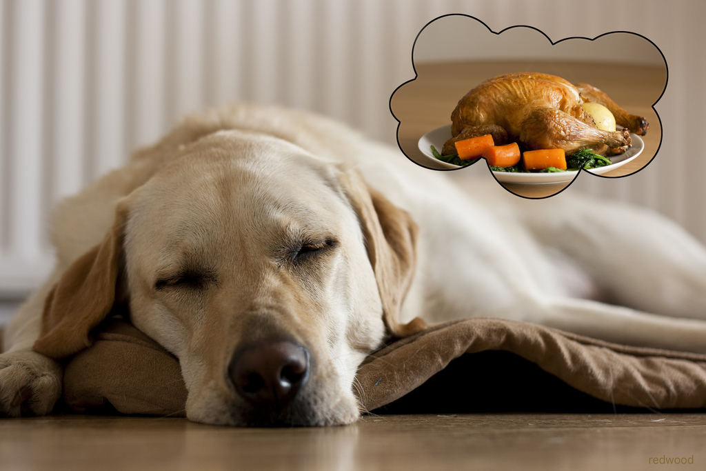 Alvó kutya vacsora után