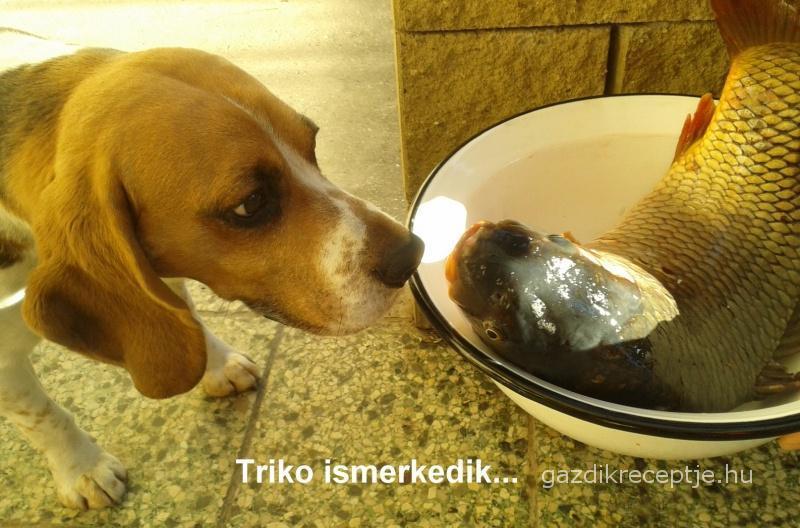Triko ismerkedik a hallal