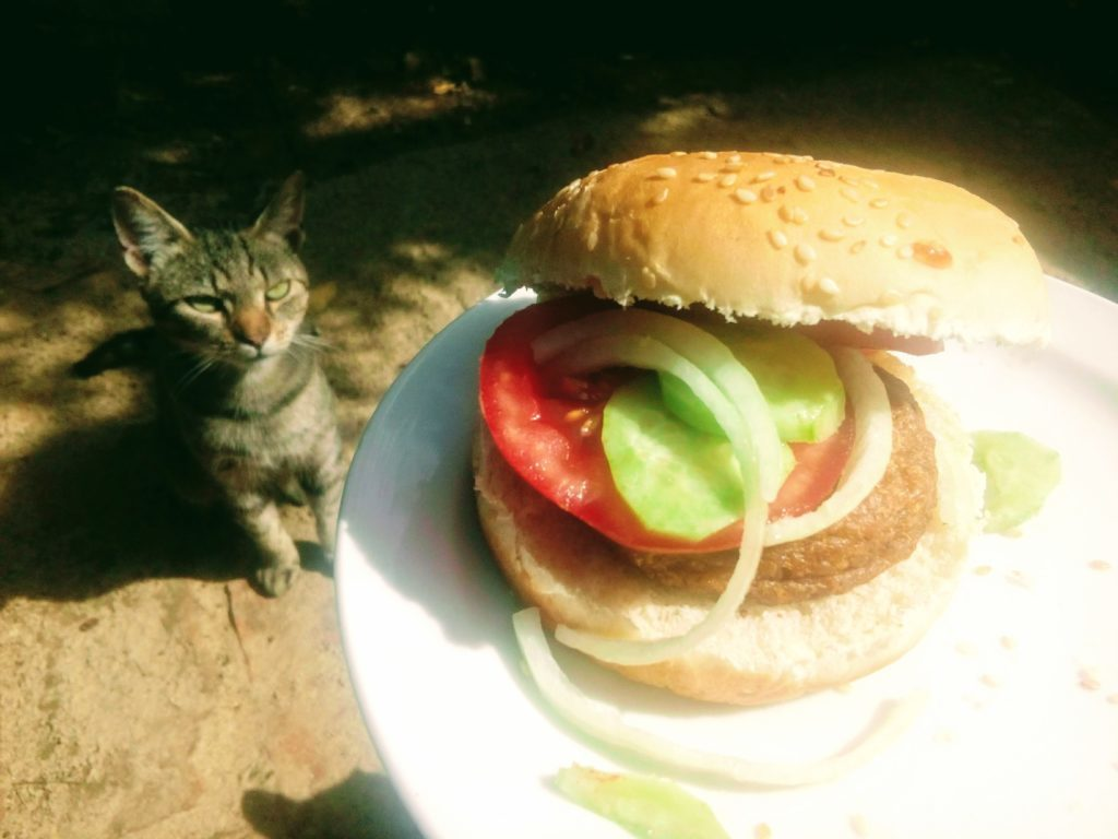 Koko macska hamburger